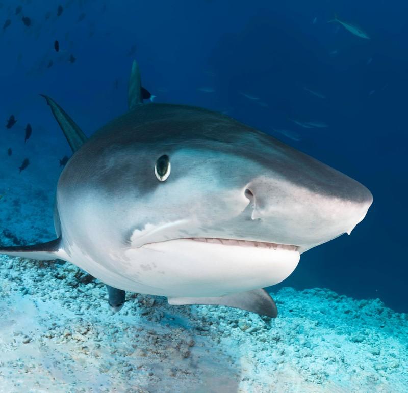 Haie sind ein Grund zum Fürchten für viele.